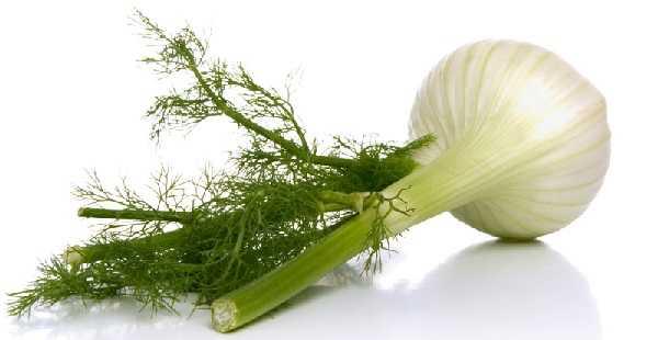 ¿Es Bueno el Hinojo Para la Gastritis?2