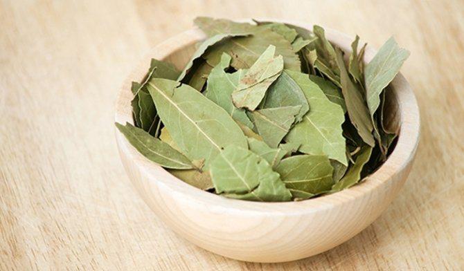 ¿Qué Hierbas Aromáticas Son Buenas Para la Gastritis?3