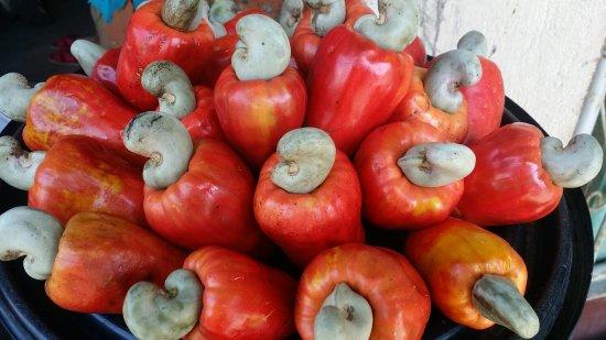 ¿Sirve el Marañón Para la Gastritis?
